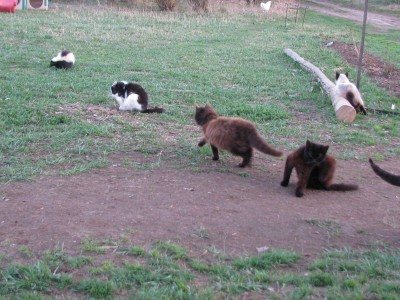The cat herd checking on the skunk