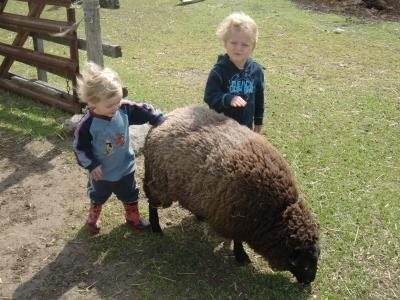 William, Gabriel and Joseph uor favourite little ram