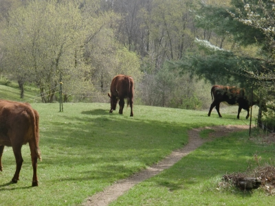Moving down the path to the pasture