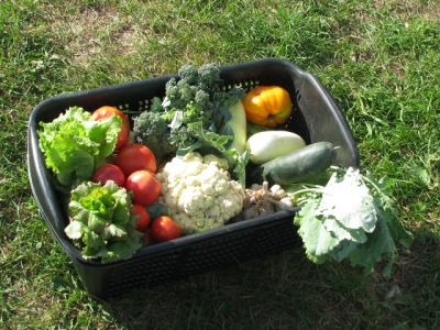 Vegetable basket for a  share, fall 2010