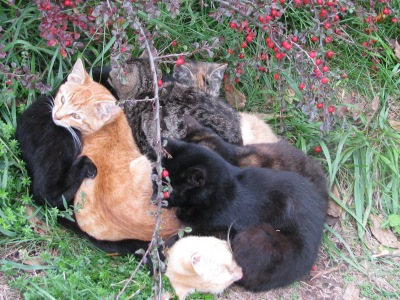 7 cats