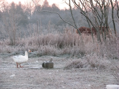 Goose and horse on that fine frosty morn.