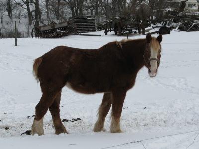 Marie horse wandering