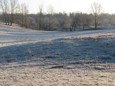 Frosty psture morning.