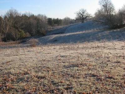 Another frosty pasture, same morning.