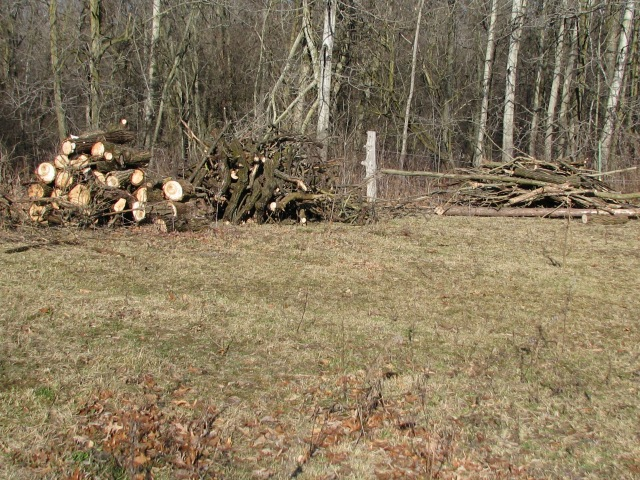 The pile of wood, two wagon loads worth, our cottonwood is in the trees behind at the bottom of the hill.