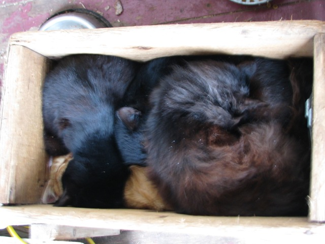 Kitties sleping in a box. Sometimes five of them will cram themselves in there.