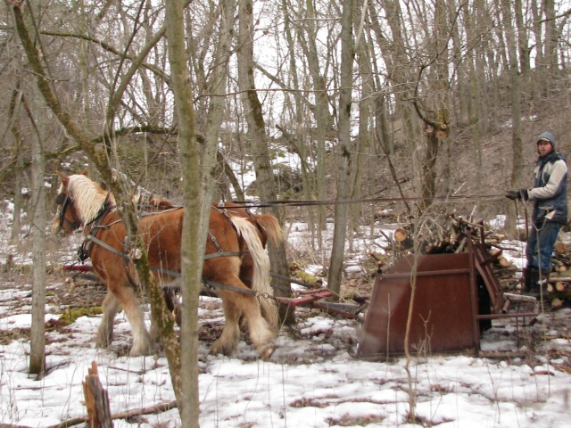the horses are just moving off with a fully loaded sled ready to tackle the slippery slope.