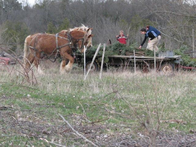 17/4/13  Maggie, William and little Devon unloading the wagon.