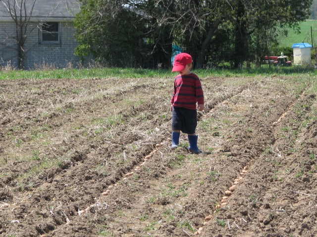 The Tater Planting inspector checking spacing.