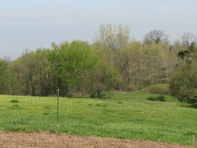 This other favourite shot has lots of spring greenery, the cottonwoods are in the centre background.