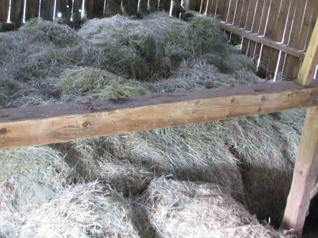 The hay mow ,loose hay on top of large round bales.