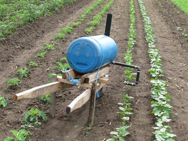 End view of the new device, beans to the right and kale to the left.