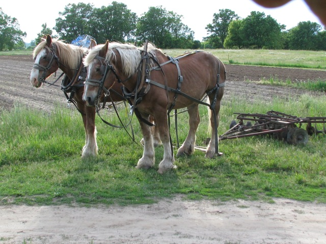 Horses resting.