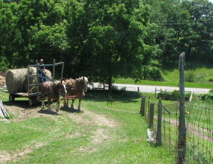 Hauling hay to the barn in 2011.  Only a few more yards to go, barn is just to the left.