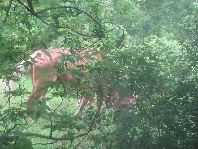 The horses from our kitchen window as they mow the grass in our back yard/chicken run.