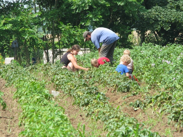 The tater pickin' gang hard at work in the Norlands.