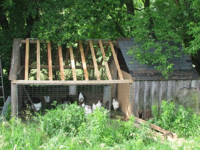 Summertime photo of the chicken house.  The plastic cover is now on so it does look a bit different.