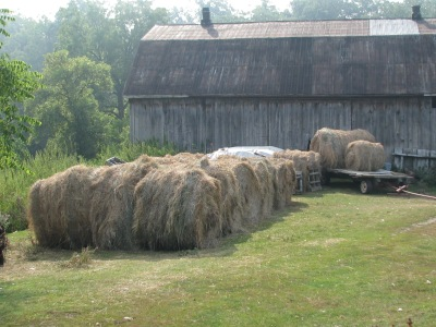 The hay pile outside the barn with more than this already inside.
