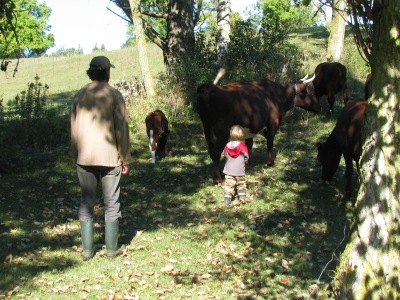 The three year old cow boy in training under the watchful eye of his instructor father.
