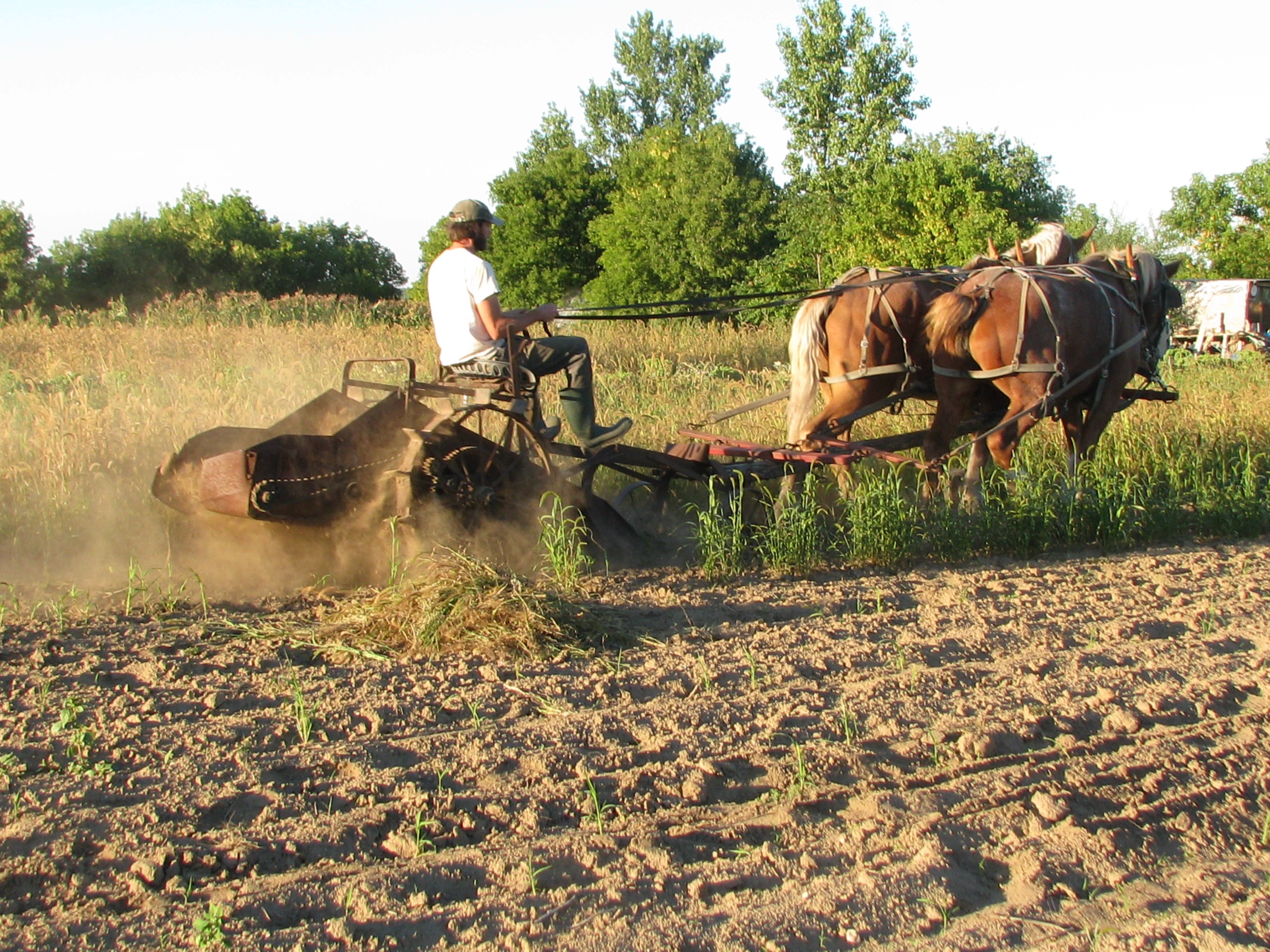 Garden and potato digging 024 | Devon Acres Organic Farm