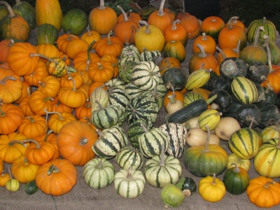 This is the table full of the small decorative pumpkin and squash.