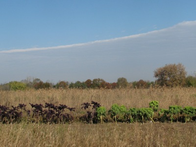 The red and green kale rows, brown fall garden either side, trees behind with leaves still, grey band of clouds but mostly blue sky.