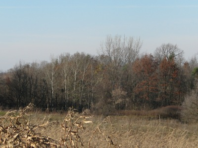 The trees at the North-west corner of the farm, photo taken to-day.  Pretty much all of the leaves are now off the trees. there are Manitoba maples, trembling Aspen, Cottonwood, Red and White Oaks, Basswood and a couple more I'm sure.