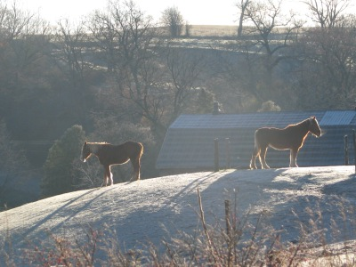 Horses still snoozing on Wednesday's frosty morning.