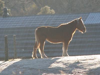 Wimpy, the gelding.