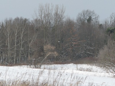 The back corner of the property near to the top of the river bank Looking very wintery but it is nice and sunny.