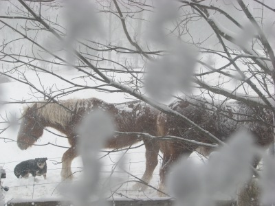 Sunday morning from the kitchen window.  The horses are well protected from the winds at this spot.