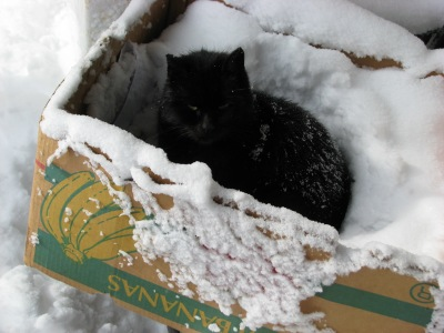 Whitey (he does have some black ahead of the tip of his tail) in his favourite box.