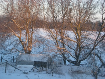 Eight am Tuesday, -22C , chickens still inside where they will remain for the whole day.  More comfortable in there.