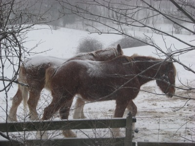 The horses are waiting for their morning grain ration on a real cold early morning.