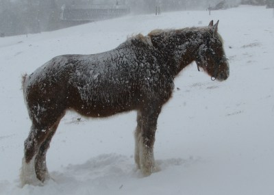 Our mare is at least 24 years old and still looks in good condition in spite of her age and a harsh winter.  Warm pasture is much to be preferred.