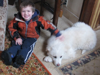 William (3 and a half) gives relative size to a 14 week old Maremma puppy.  These dogs love sheep and little children but find older kids and adults to be suspicious entities.