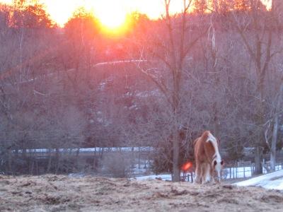 April fool's sunrise.