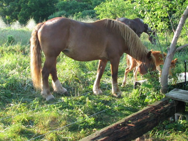 Mother Nell and Foal Leucan.