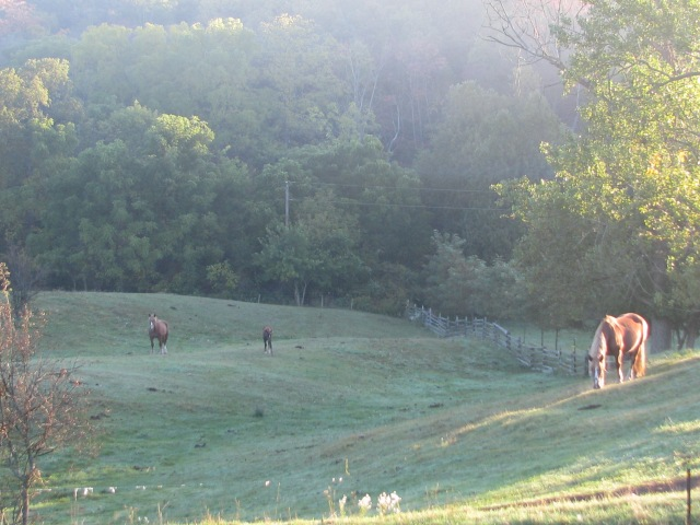 The horses on early morning pasture hills.