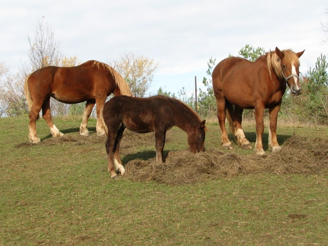 Marta, Leucan and mother mare Nell on the right.  Photo taken on Wednesday.