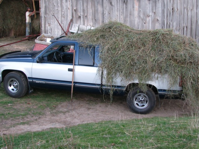 When we were able, if we had the time, we would load the truck with more than twice this amount of hay.  The truck would carry almost a half wagon load.