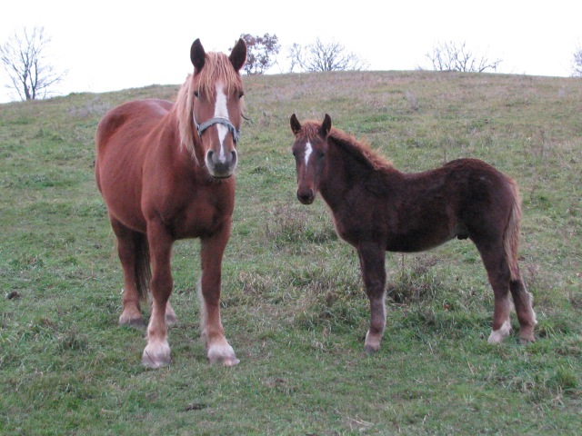 Our cute little colt Leucan with his mother and he is not so little any more.
