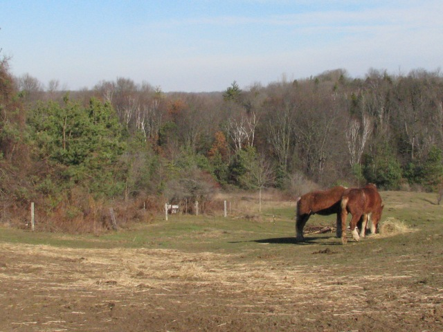 The old team, Wimpy and Marie.  A real nice fall day.  not real warm but lots of sun.