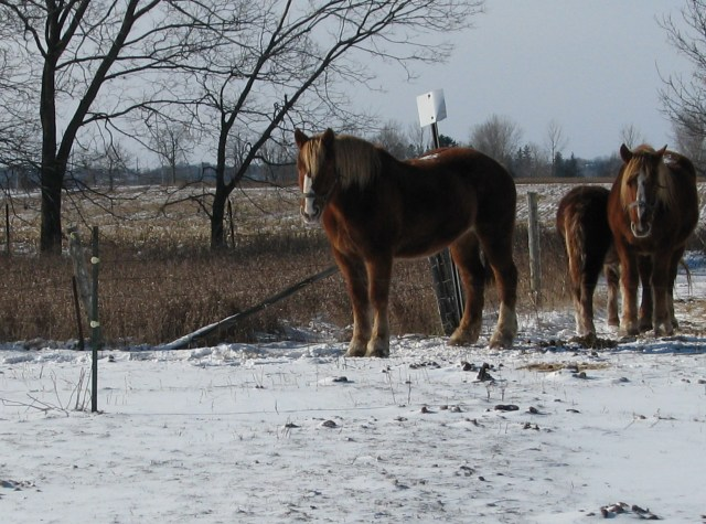 The horses at a windless area of their pasture.