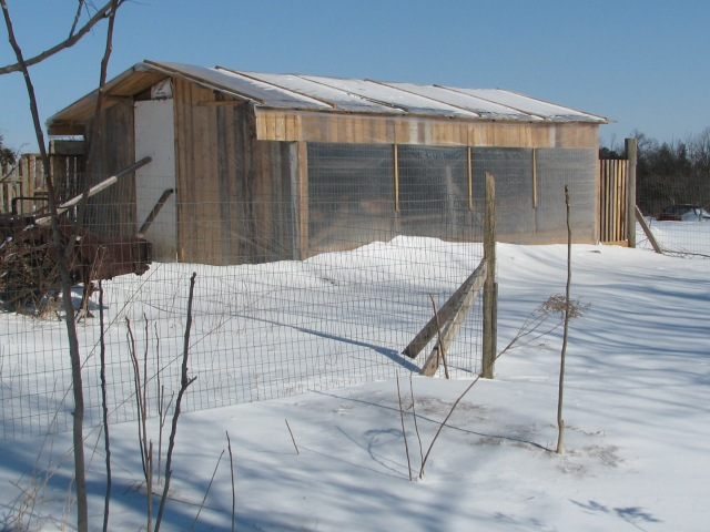The chicken house all closed up for warmth on a very nice and sunny but very cold Thursday morning.