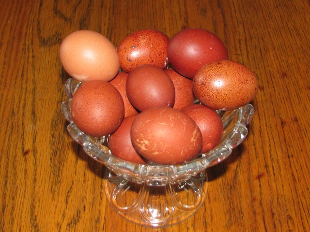 Same bowl of eggs with one of the eggs from the main flock added to the upper left to show the contrast in colours.