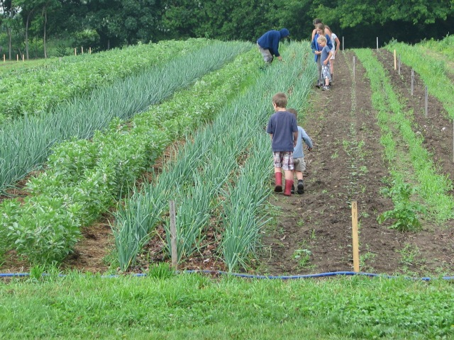 The Onion harvesting gang last Thursday.  the younger ones were very helpful, the very youngest not so much.