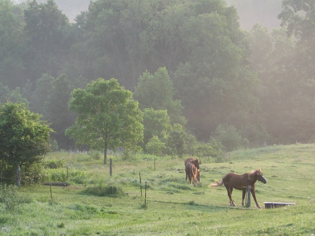 The horses in the mist doing an odd little move.