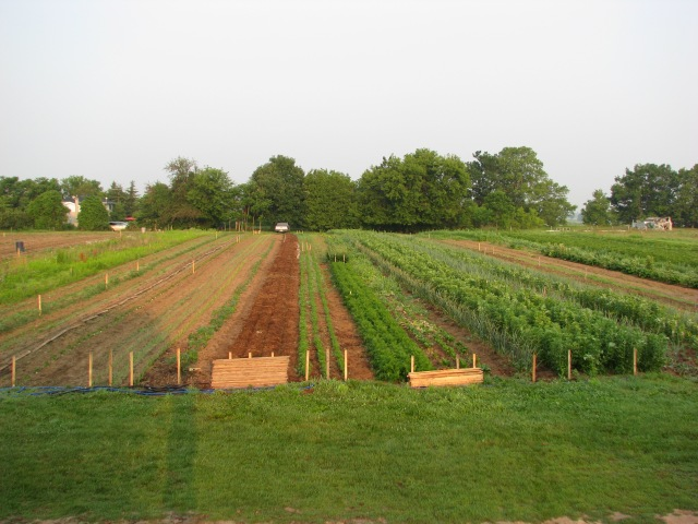 A wider angled view of the garden.